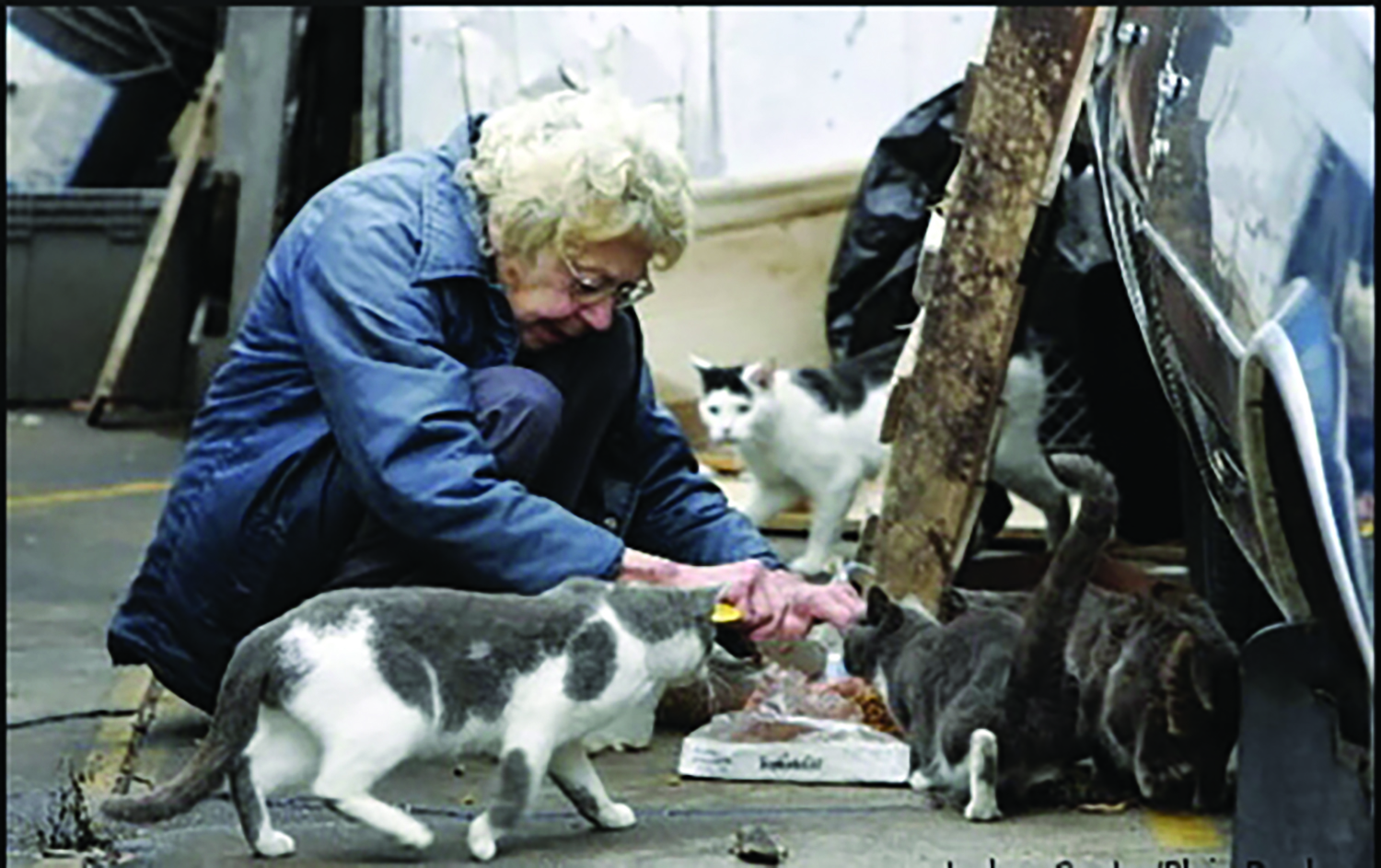 Kristen Grandinetti tried to pass a law that would put women like this one in jail for the crime she is committing: feeding stray cats. After an expose in the Reporter the proposed law unraveled as thousands of cat lovers complained.