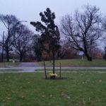 """HAMILTON: Hyde Park or """"Died Park"""" Should be a Public Decision"""