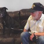 Niagara SPCA to Waive Adoption Fee for Veterans