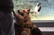 Niagara County SPCA Shelter Dogs Take Field Trip to Aquarium of Niagara